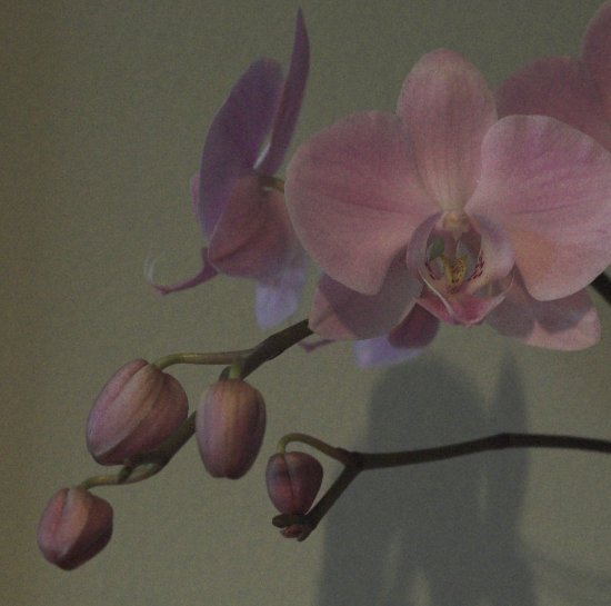 orchid flower close_up available_light