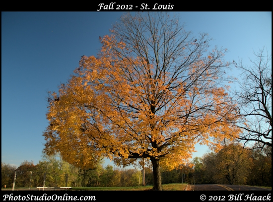 stlouis missouri usa fall color gold CCP tree split 102112