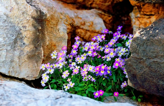 kakithalassa attiki greece beach spring flowers rocks springbook