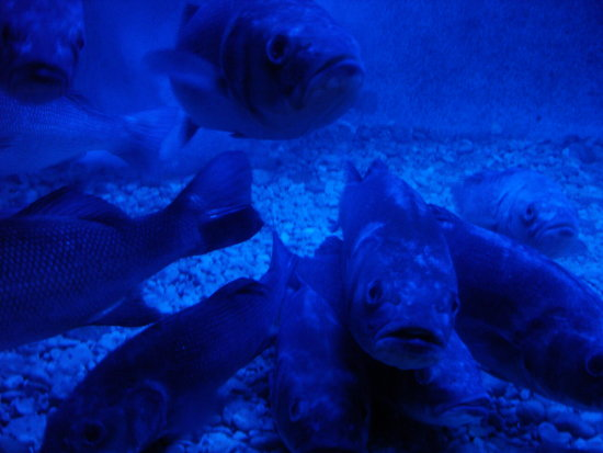 blue aquarium dubrovnik kroatia fish fishes