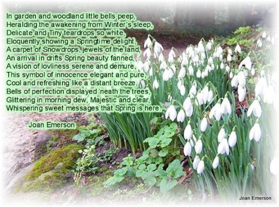 Snowdrops PoemsWednesday