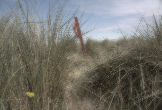 A lifebuoy in the sand dunes at a local beach.