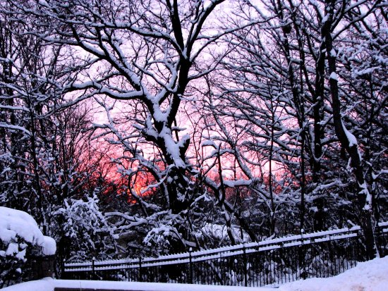 snow sunset trees