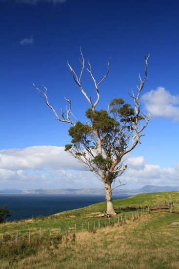 Another Lone Tree