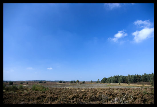 One of the stops we had last Sunday was at this beautiful heath.