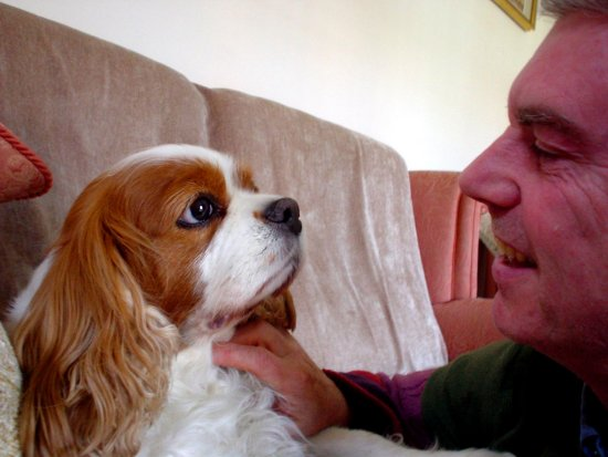 Pet Dog Cavalier KingCharles Love