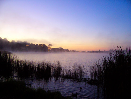 sunrise Lake Rotoroa