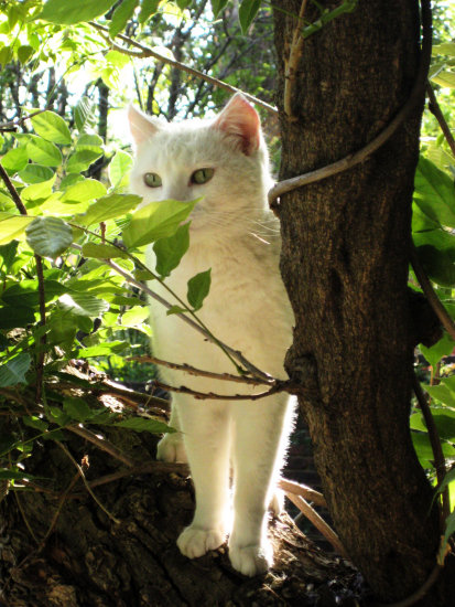 cute cat white tree green leaves eyes