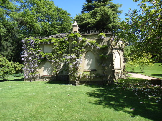 NostellPriory Yorkshire NationalTrust Wisteria