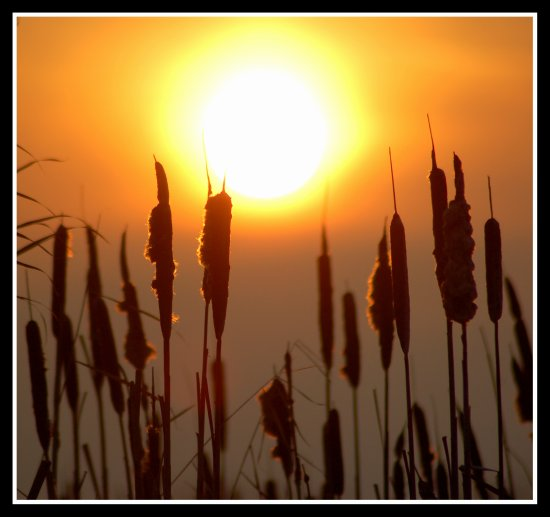 sun sunset greylake somerset reeds bullrushes rspb nature somersetdreams