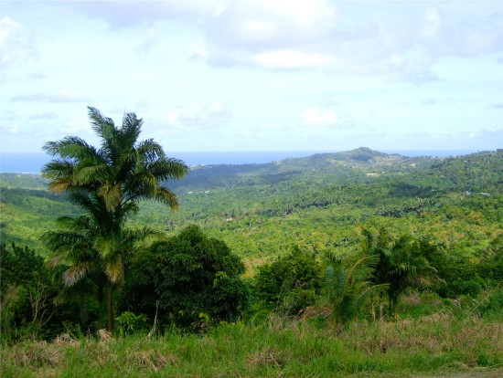 Barbados landscape Carribean