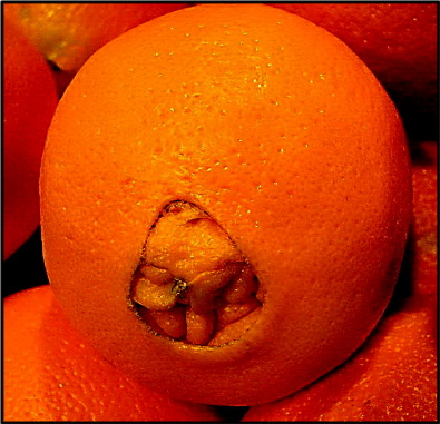 fruit orange navel