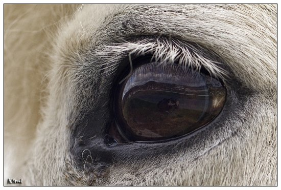horse pet animal eye