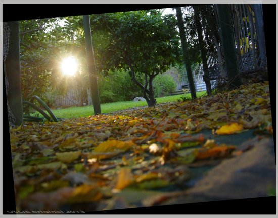 leaves path back garden sunset home autunm perth littleollie