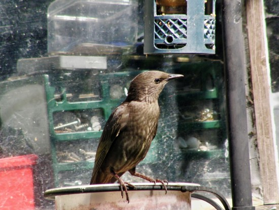 Bird at feeding sstation