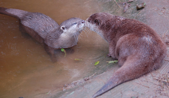 valentinefriday otters
