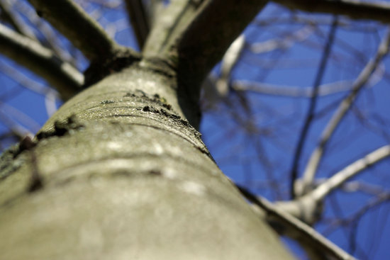 One of the first things I discovered about having a SLR... Hey, I have a depth of field now (or b...