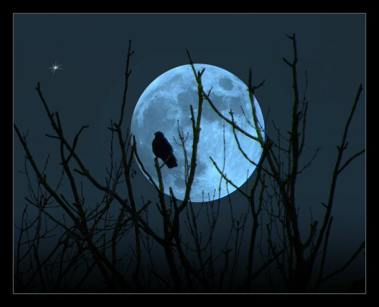 moon trees bird digitalartclub