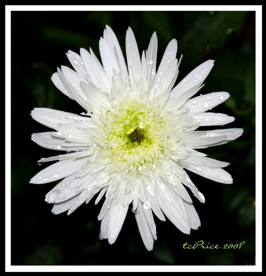 white flower scenebyme