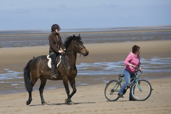 horse on crosby beach