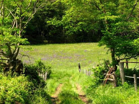 nature field spring flowers France sun road path tree