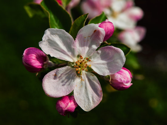 ...and this will be the last blossom photo for this year (I hope so :-))