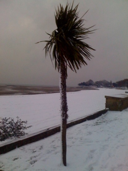 snow palmtree wrong