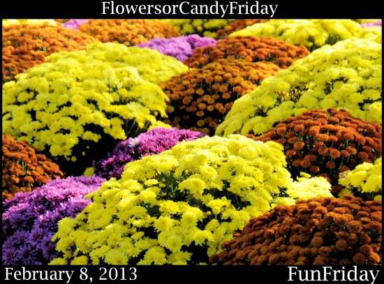 FunFriday FlowerorCandyFriday 020813