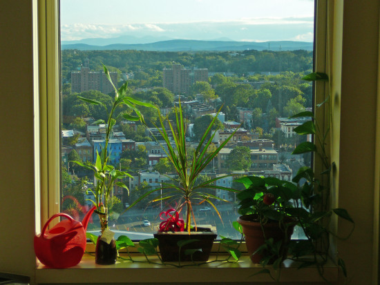 plants window mountain clouds ribbon