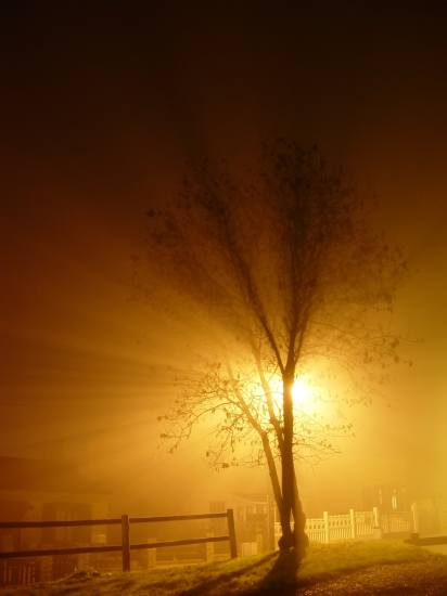 tree night fog