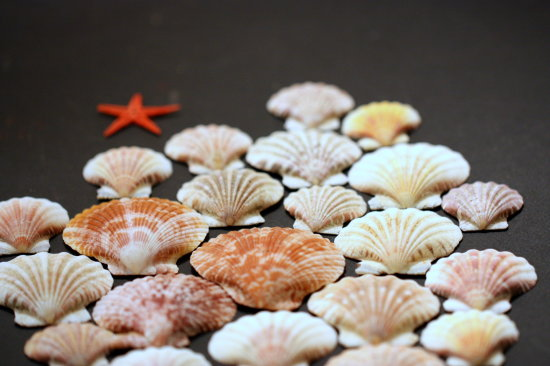 sea shells colors sequence