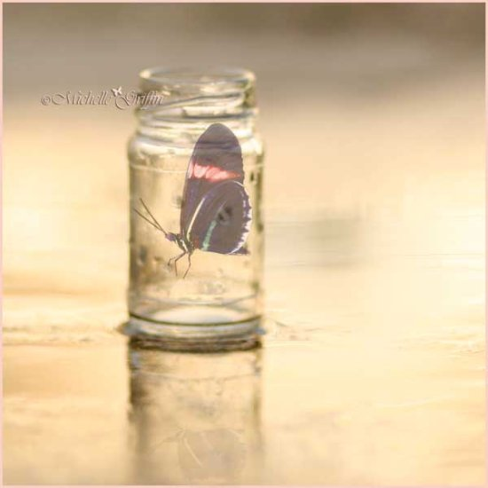 butterfly rain jar pink freedom