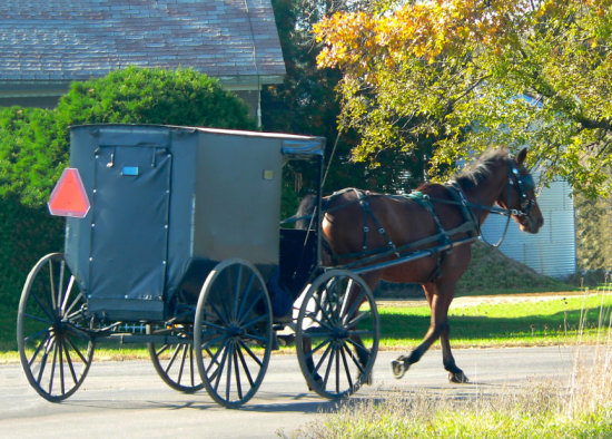 Amish roadster cart horse four wheeled country lane