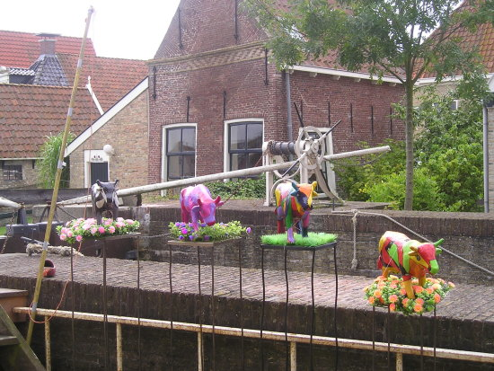 Real Dutch cows :)