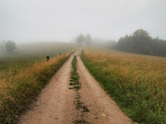 nature foggy path Bohemia