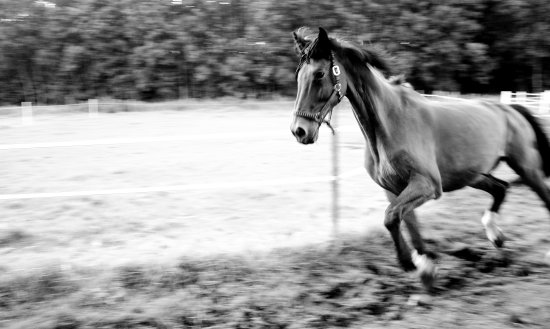 horse movement black and white