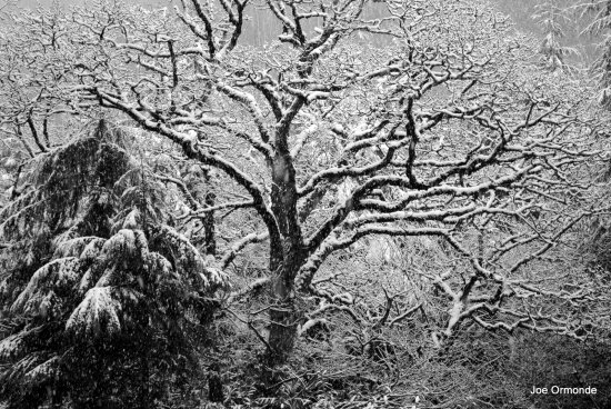 snow tree nature winter