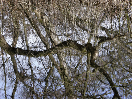 Reflection water tree