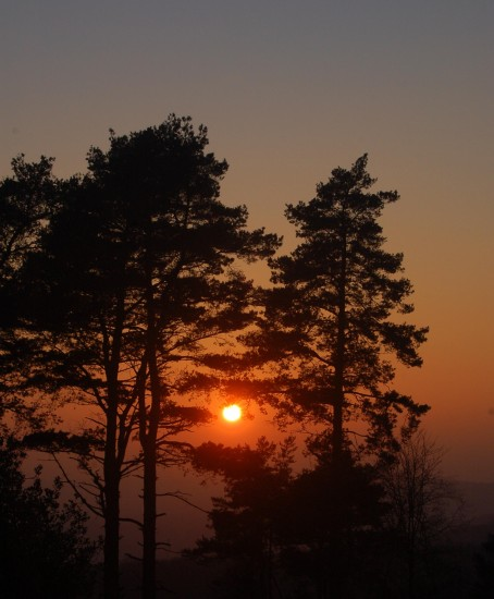 sunset trees blackdown haslemere surrey