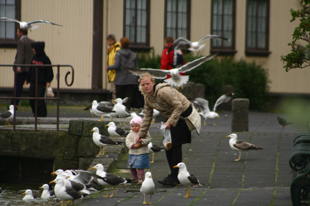Birds attacking people