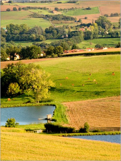 nature landscape Beaujolais France animals cows pond mysongfriday