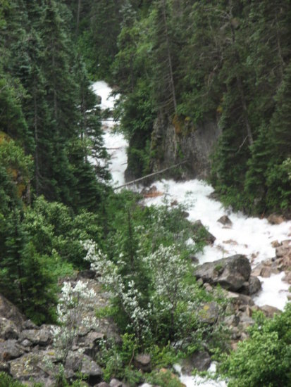 northtoalaska coralprincess alaska skagway whitepass railroad trees rocks