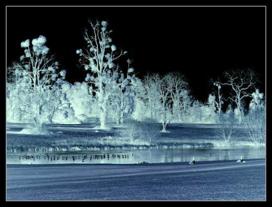 Winter ice snow trees lake birds