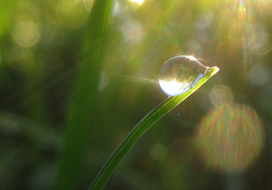 reflectionthursday dew drop