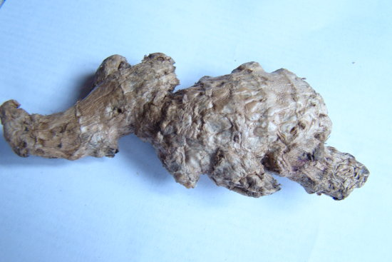 Ginger Root resembles Baby Elephant