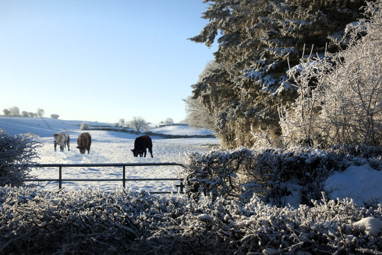 snow gate trees cattle
