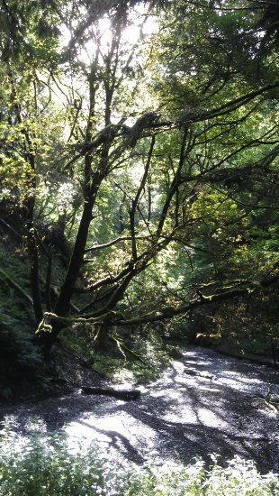 wood woodland trees forest radnor southwales