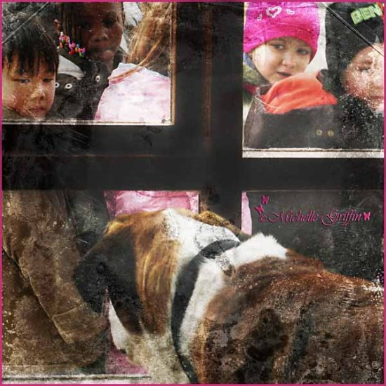 doggie in the window saint bernard dog kids