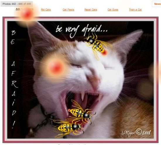 cat feline animal fear terror wasp spoof