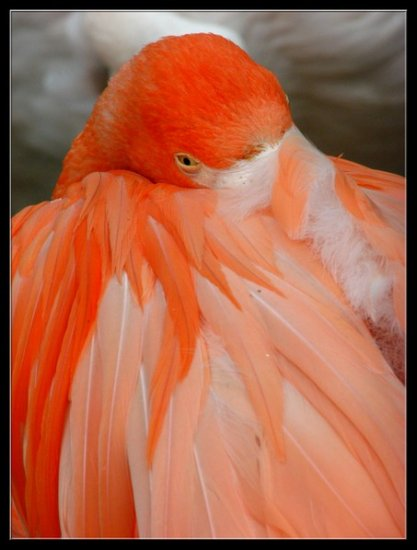 bird animal orange